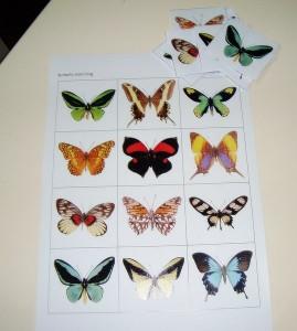 kelebek_eşleştirme_etkinliği