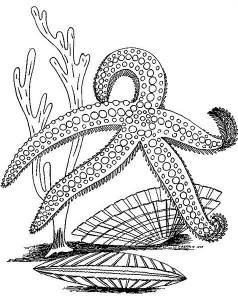 deniz_yıldızı