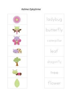 böcekler_kelime_eşleştirmeleri
