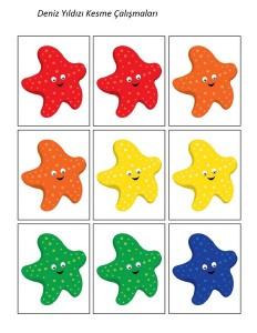 deniz_hayvanları_deniz_yıldızı