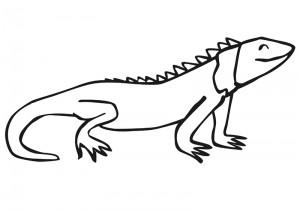 iguana_boyama
