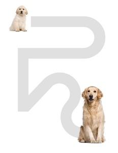 köpek_etkinlik