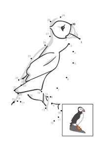 kuş_sayı_birleştirme