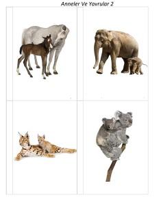 okul_öncesi_anne_hayvanlar