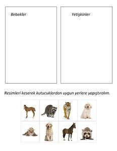 okul_öncesi_hayvan_gruplama