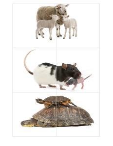 süper_hayvanlar_puzzle