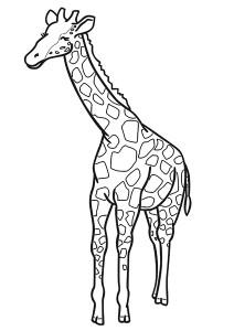 zürafa_boyama