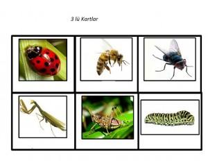 böcek_üçlü_kartlar
