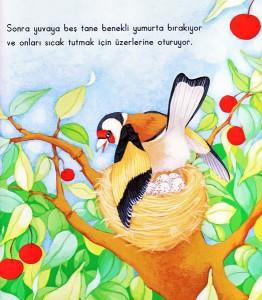 kuşlar_kitabı