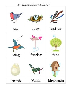 okul_öncesi_kuş_kelimeler