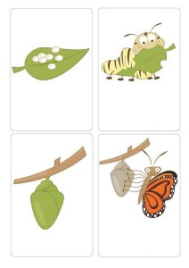 Life-Cycle-of-a-butterfly-flash-cards-Busy-Little-Bugs-page-001 (Copy)