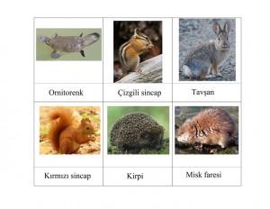 hayvan_eşleştirme_kartları