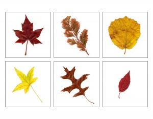 okul_öncesi_sonbahar_etkinlikleri_eğlence