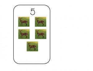 sayı_kartları