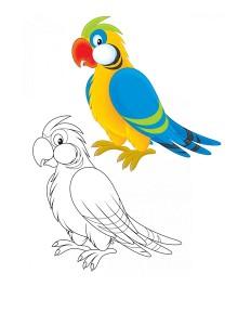 boyama_papağan