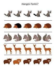 okul_öncesi_orman_hayvanları_hangisi_farklı