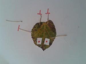 sonbahar_yaprakları_etkinlikler