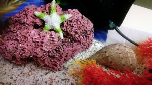 deniz_hayvanları_etkinlikleri