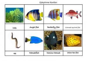okyanus_hayvanları_ing_eşleştirme