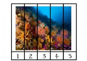 okyanus_hayvanları_puzzle_ (2)