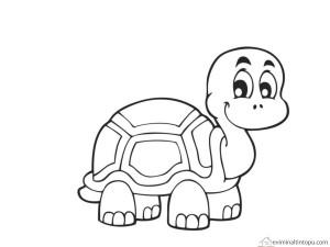 kaplumbağa boyama etkinliği
