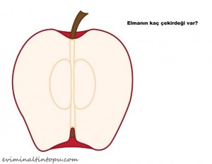 elma çekirdekleri ile sayı çalışması (1)
