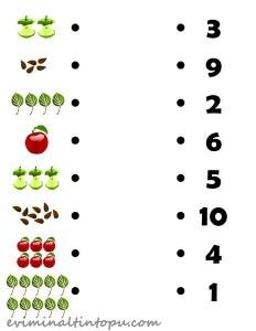 elma ile tane hesabı etkinlikleri (3)