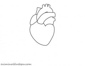 organlarımız temalı kartlar(11)