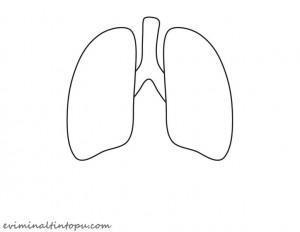 organlarımız temalı kartlar(5)