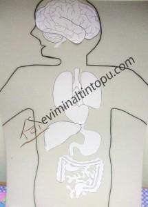 organlar boyama çalışması