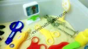 organlar duyusal havuzu (4)