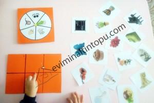 beş duyu öğrenme etkinlikleri (1)