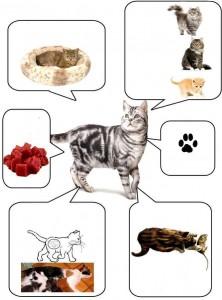 hayvanları tanıyalım temalı etkinlikler