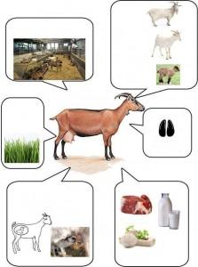 hayvanları yakından tanıyalım