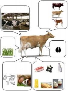 hayvanların temel özellikleri okul öncesi kartları
