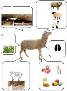 hayvanlar eğlenceli bilgi kartları