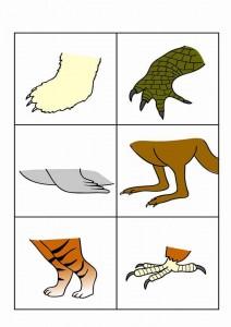 hayvanlar gövde ayak eşleştirme etkinliği (2)