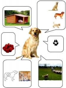 köpekler hakkında bilgi kartı