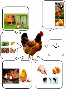 okul öncesi hayvanlar bilgilendirme etkinlikleri