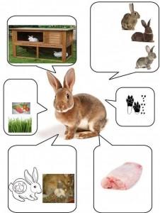 tavşan bilgi kartı