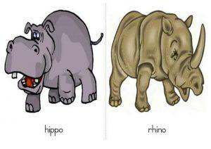 hippo eğitici kart