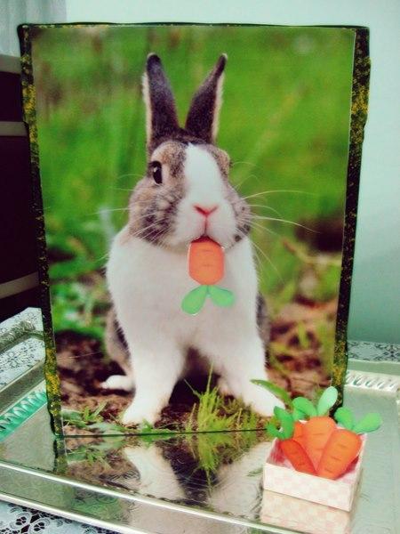 tavşan_besleme