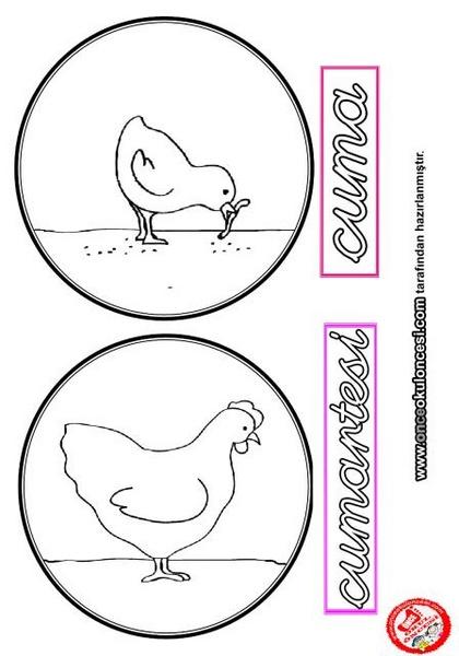 Tavuk Ve Civciv Yaşam Döngüsü Montessori Etkinlikleri Evimin Altın