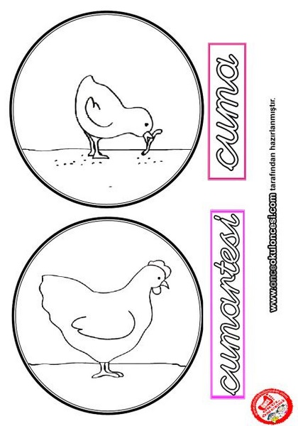 Tavuk Ve Civciv Yasam Dongusu Montessori Etkinlikleri