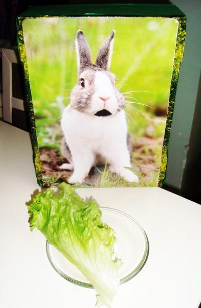 Photo of Tavşan İle İlgili Etkinlikler