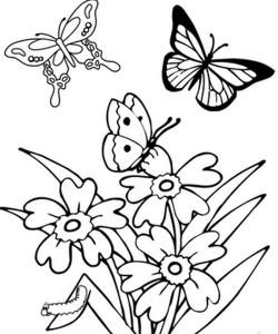 kelebek_boyama_sayfaları_eğlenceli (1)