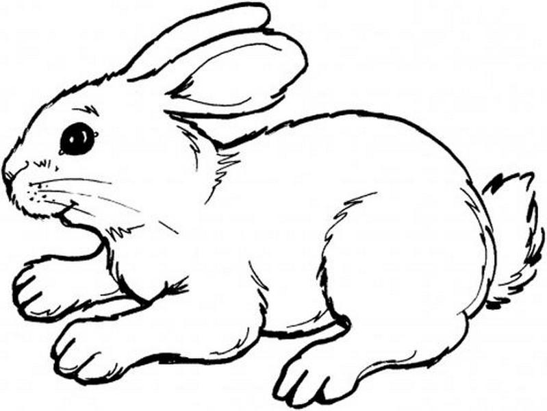 Tavşan Boyama Sayfaları Evimin Altın Topu