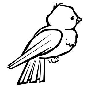 anasınıfı_kuş_boyama_sayfaları_eğlenceli