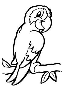 anasınıfı_kuş_boyama_sayfaları_papağan