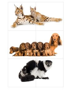 harika_hayvanlar_puzzle